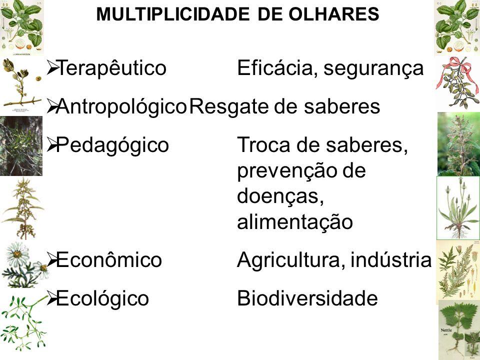 MULTIPLICIDADE DE OLHARES