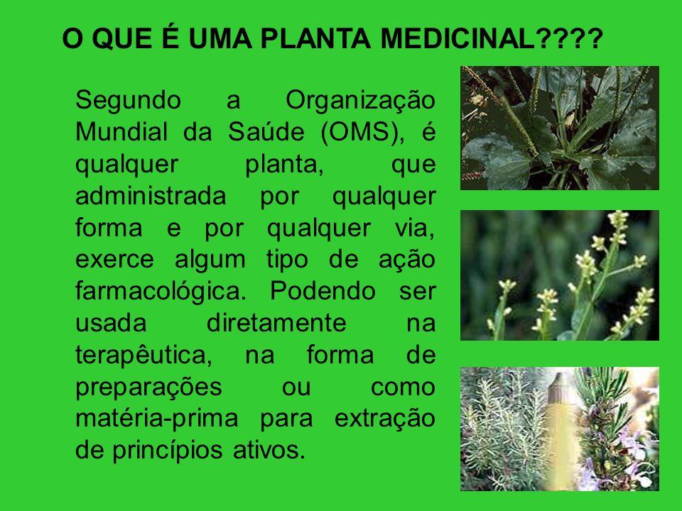 O QUE É UMA PLANTA MEDICINAL