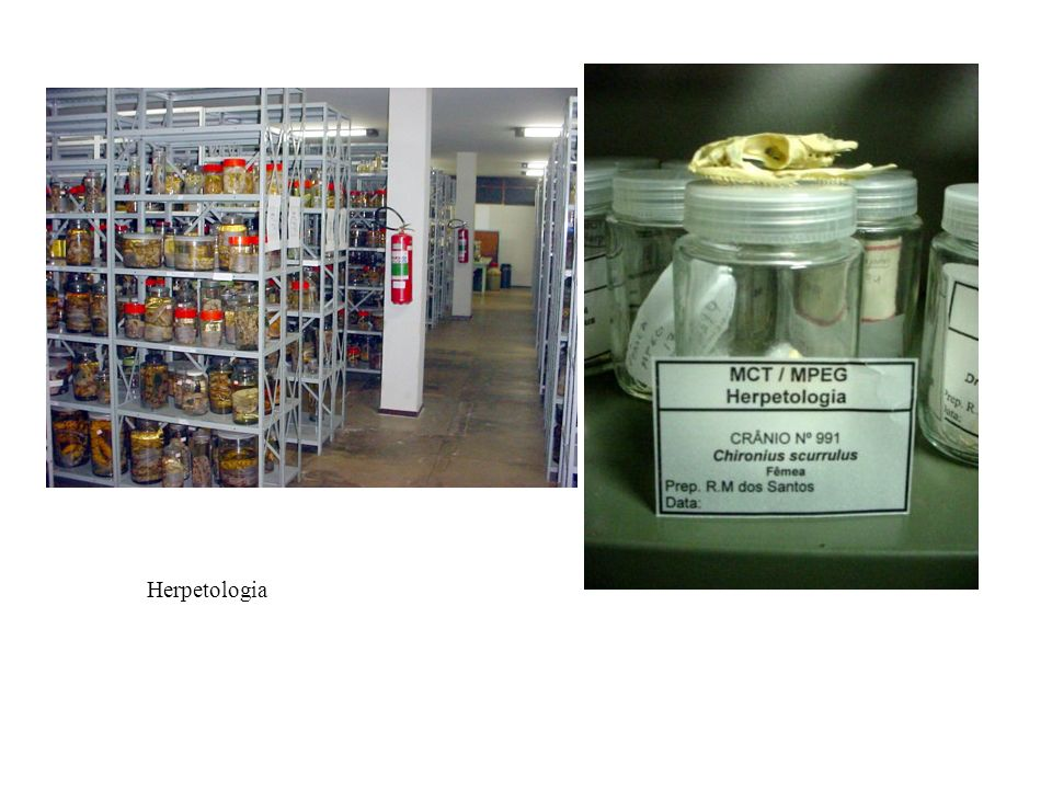 Herpetologia