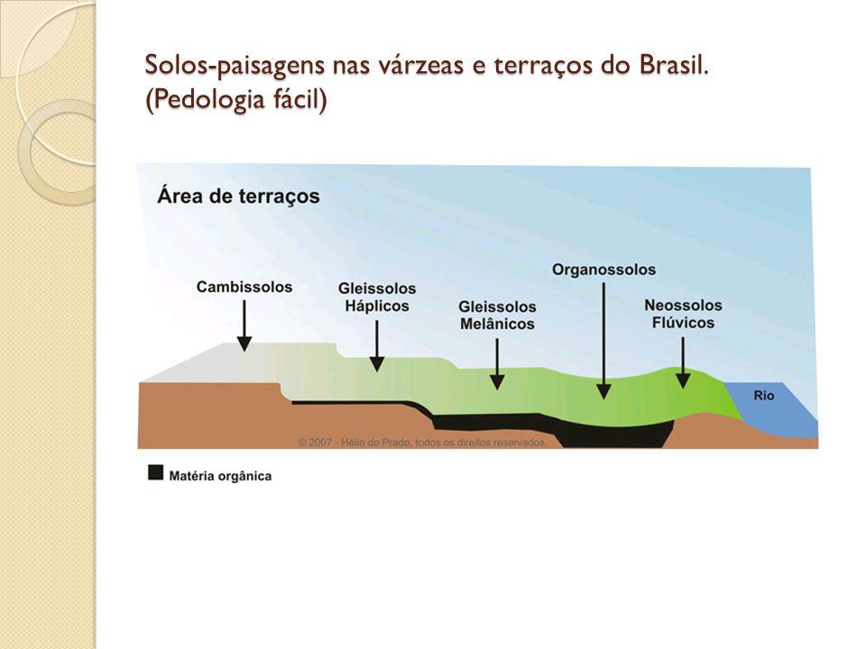Solos-paisagens nas várzeas e terraços do Brasil. (Pedologia fácil)