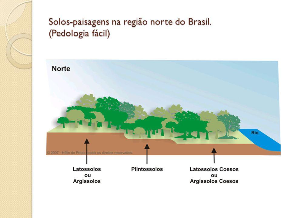 Solos-paisagens na região norte do Brasil. (Pedologia fácil)