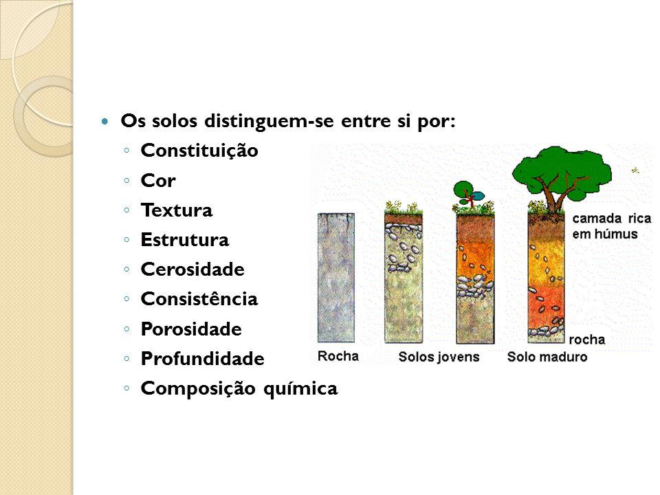 Os solos distinguem-se entre si por: