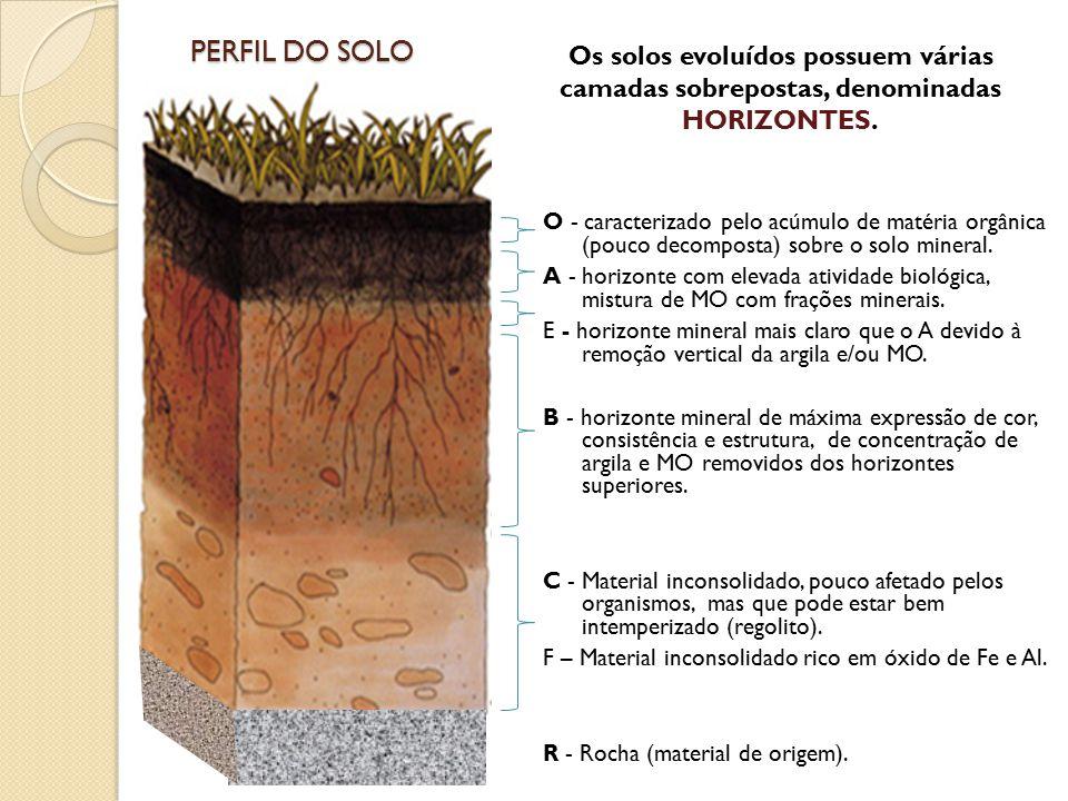 PERFIL DO SOLO Os solos evoluídos possuem várias camadas sobrepostas, denominadas HORIZONTES.