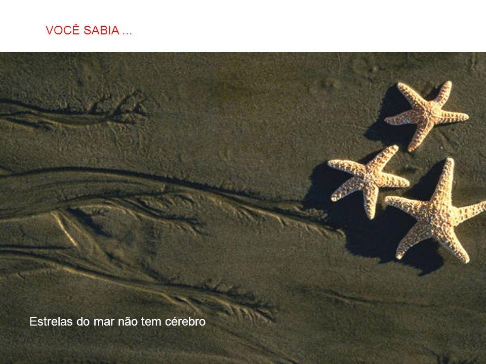 VOCÊ SABIA ... Estrelas do mar não tem cérebro