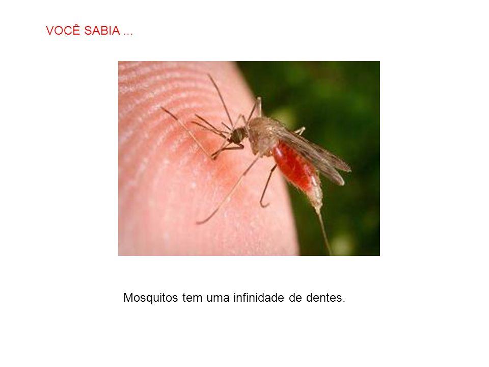 VOCÊ SABIA ... Mosquitos tem uma infinidade de dentes.
