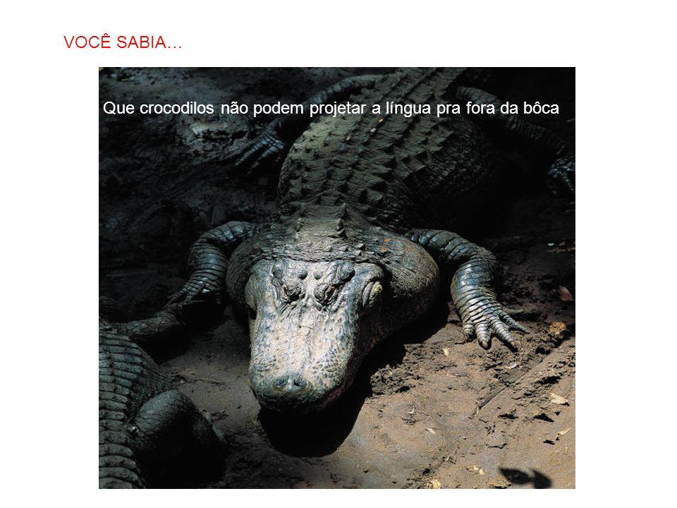 VOCÊ SABIA… Que crocodilos não podem projetar a língua pra fora da bôca
