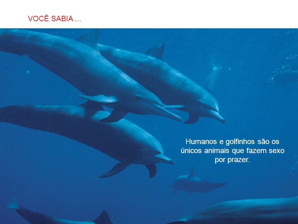 Humanos e golfinhos são os únicos animais que fazem sexo por prazer.