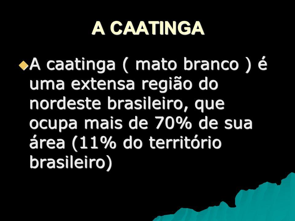 A CAATINGAA caatinga ( mato branco ) é uma extensa região do nordeste brasileiro, que ocupa mais de 70% de sua área (11% do território brasileiro)