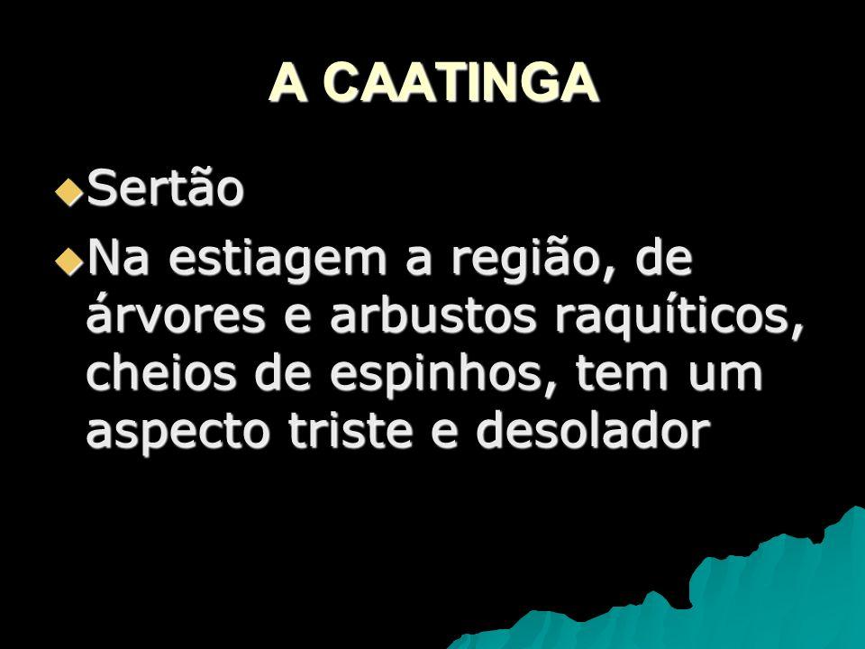 A CAATINGA Sertão.