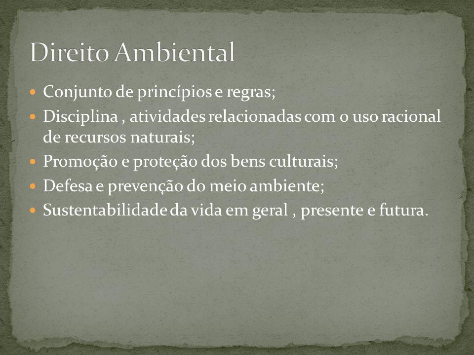 Direito Ambiental Conjunto de princípios e regras;