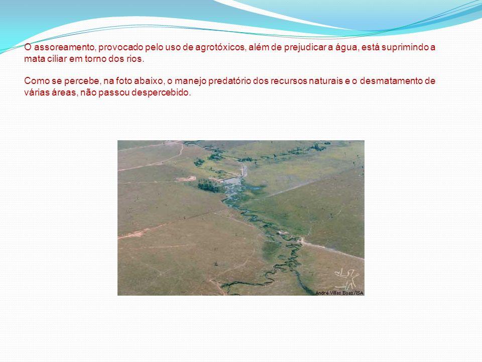O assoreamento, provocado pelo uso de agrotóxicos, além de prejudicar a água, está suprimindo a mata ciliar em torno dos rios.