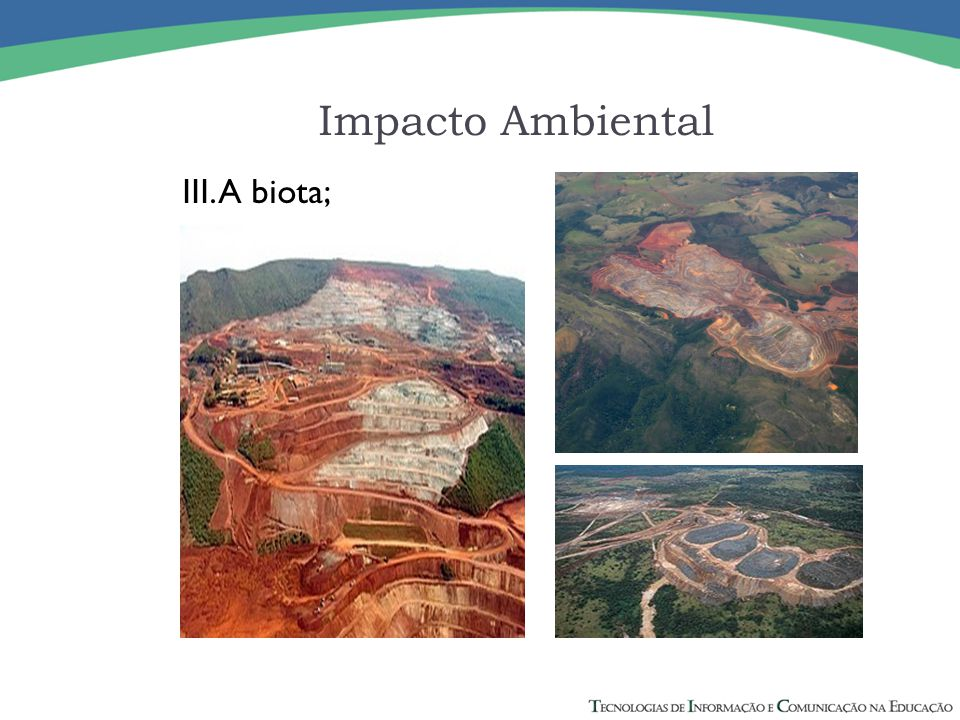 Impacto Ambiental III. A biota;