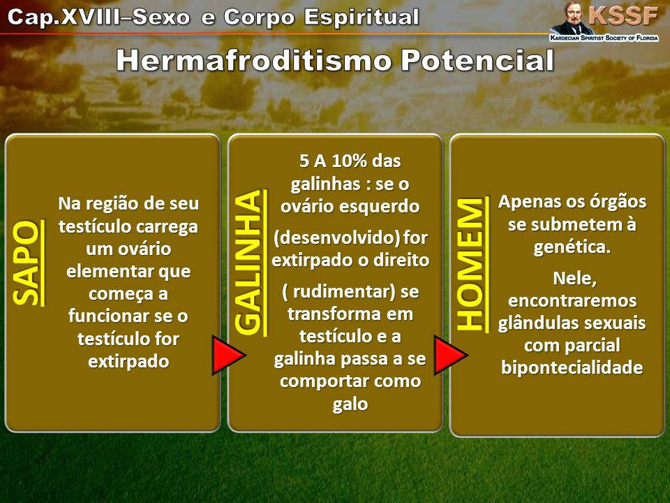 Hermafroditismo Potencial