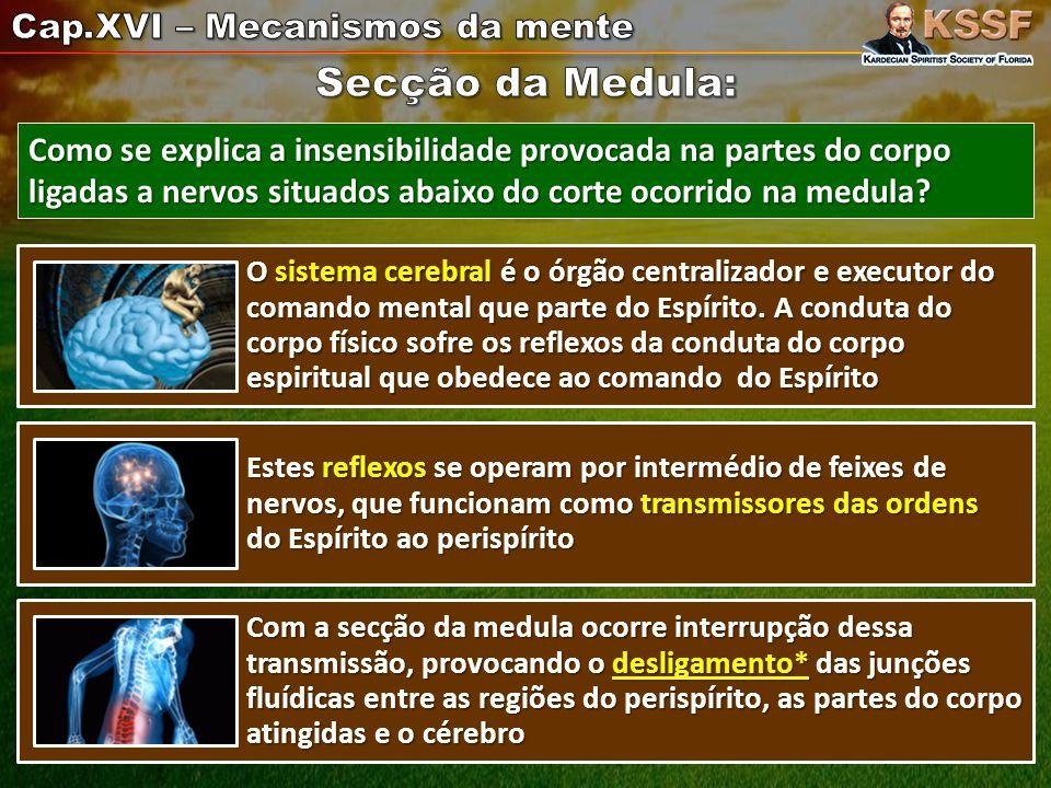 Secção da Medula: Cap.XVI – Mecanismos da mente