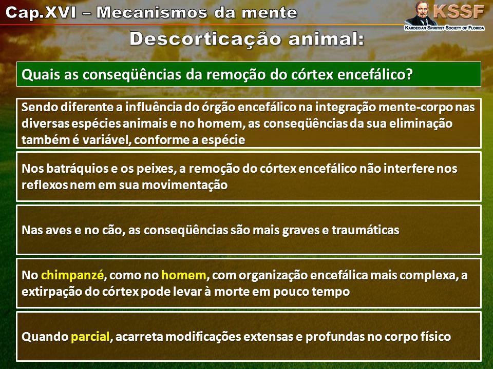 Descorticação animal: