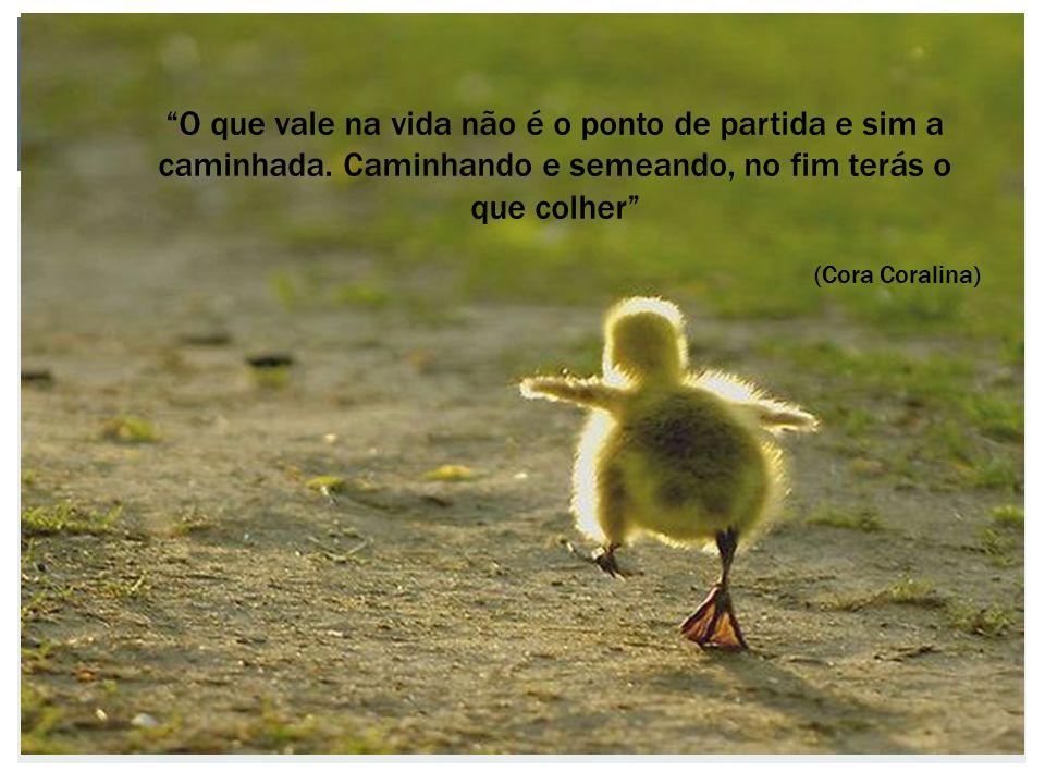 O que vale na vida não é o ponto de partida e sim a caminhada