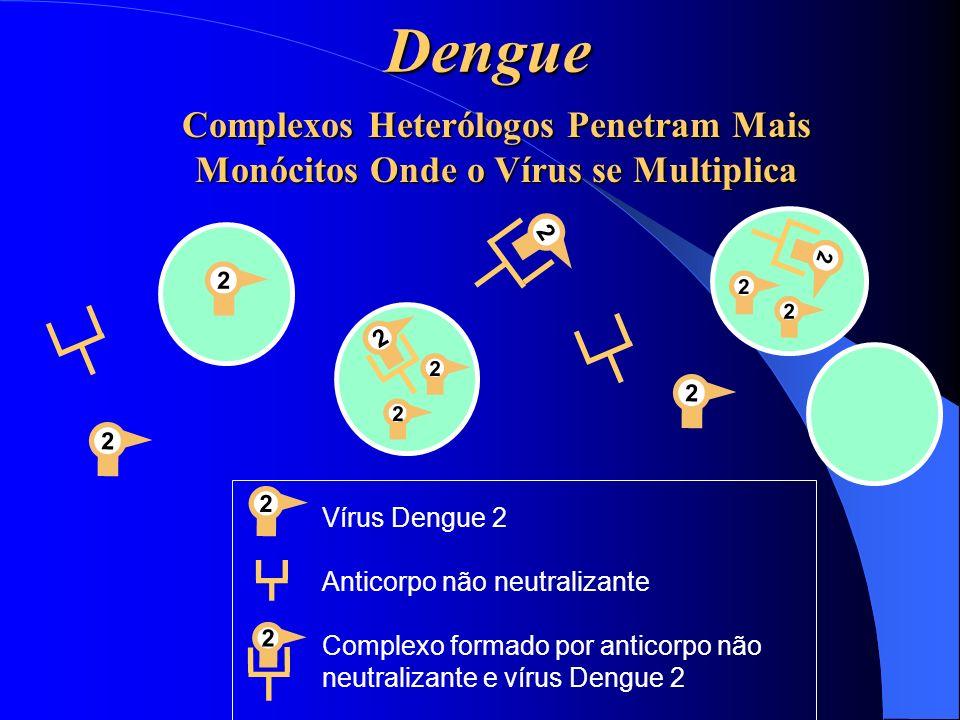 Dengue Complexos Heterólogos Penetram Mais Monócitos Onde o Vírus se Multiplica. 2. 2. 2. 2. 2.