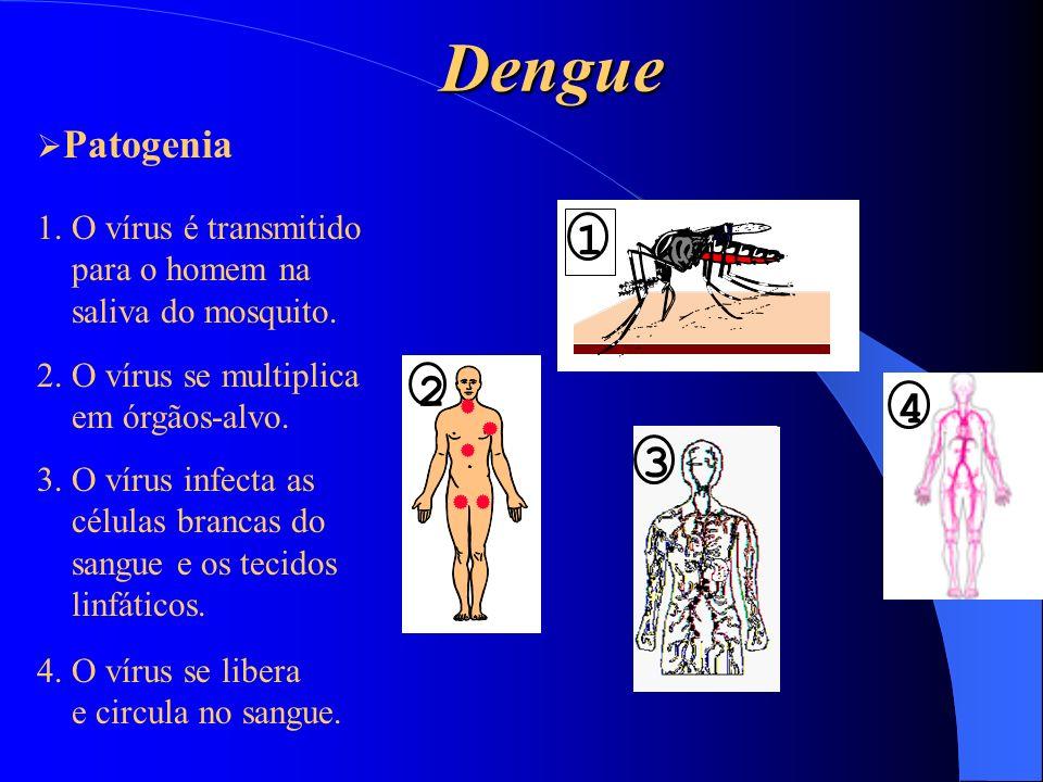 Dengue 1 2 4 3 Patogenia 1. O vírus é transmitido para o homem na