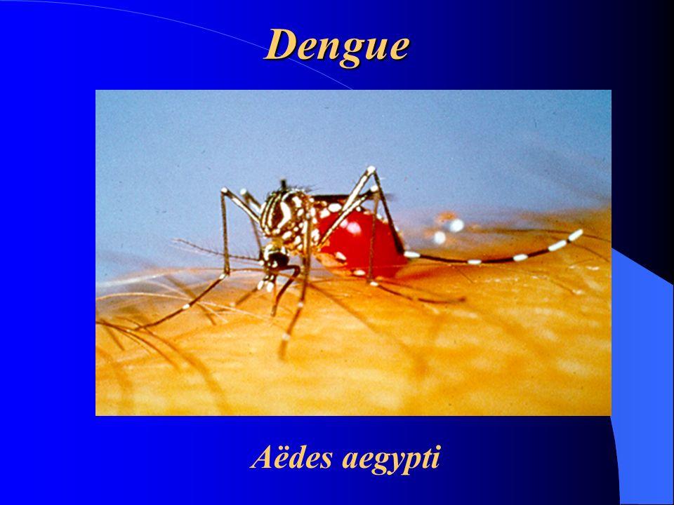 Dengue Aëdes aegypti
