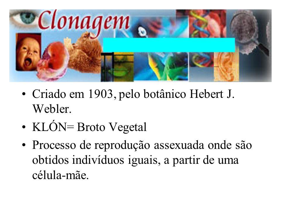 Criado em 1903, pelo botânico Hebert J. Webler.