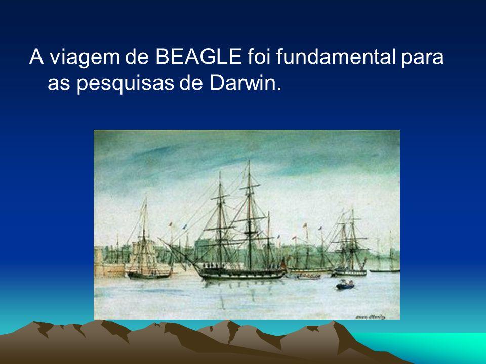 A viagem de BEAGLE foi fundamental para as pesquisas de Darwin.