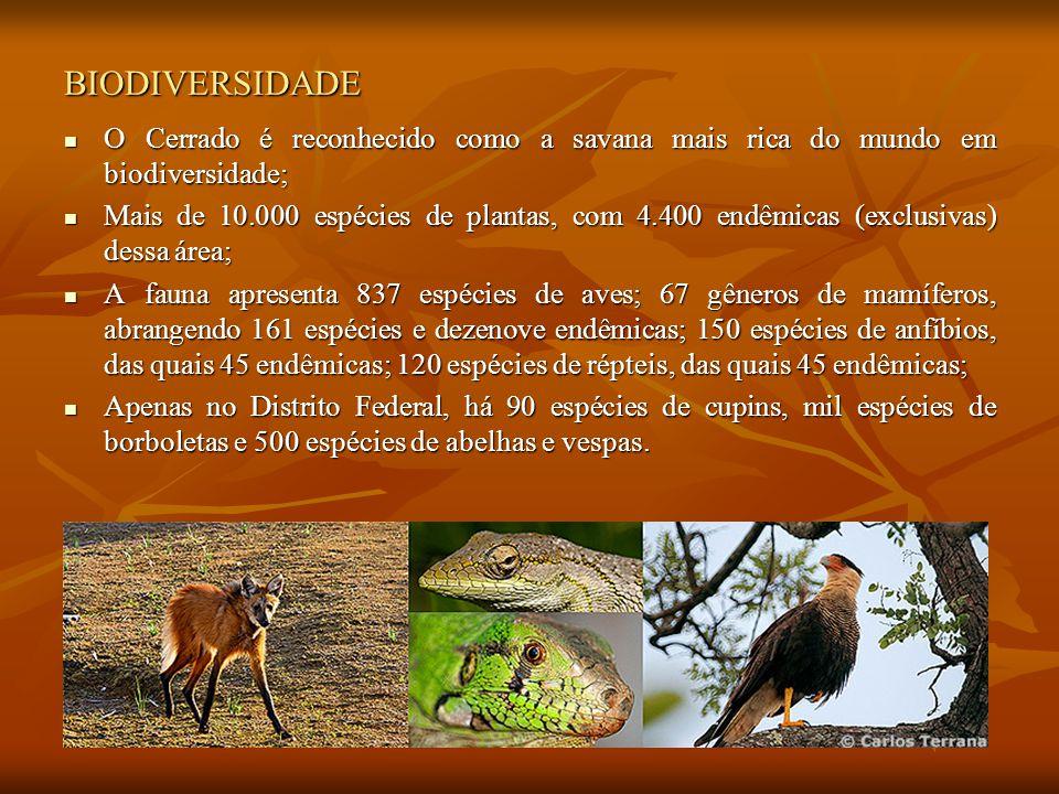 BIODIVERSIDADE O Cerrado é reconhecido como a savana mais rica do mundo em biodiversidade;