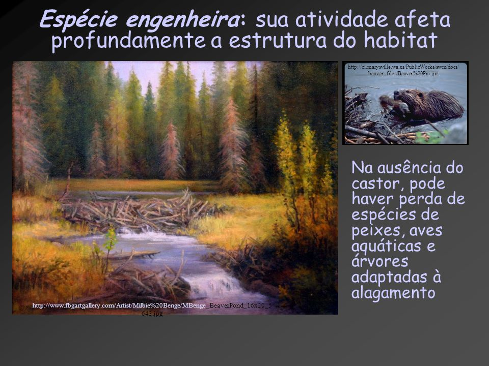 Espécie engenheira: sua atividade afeta profundamente a estrutura do habitat