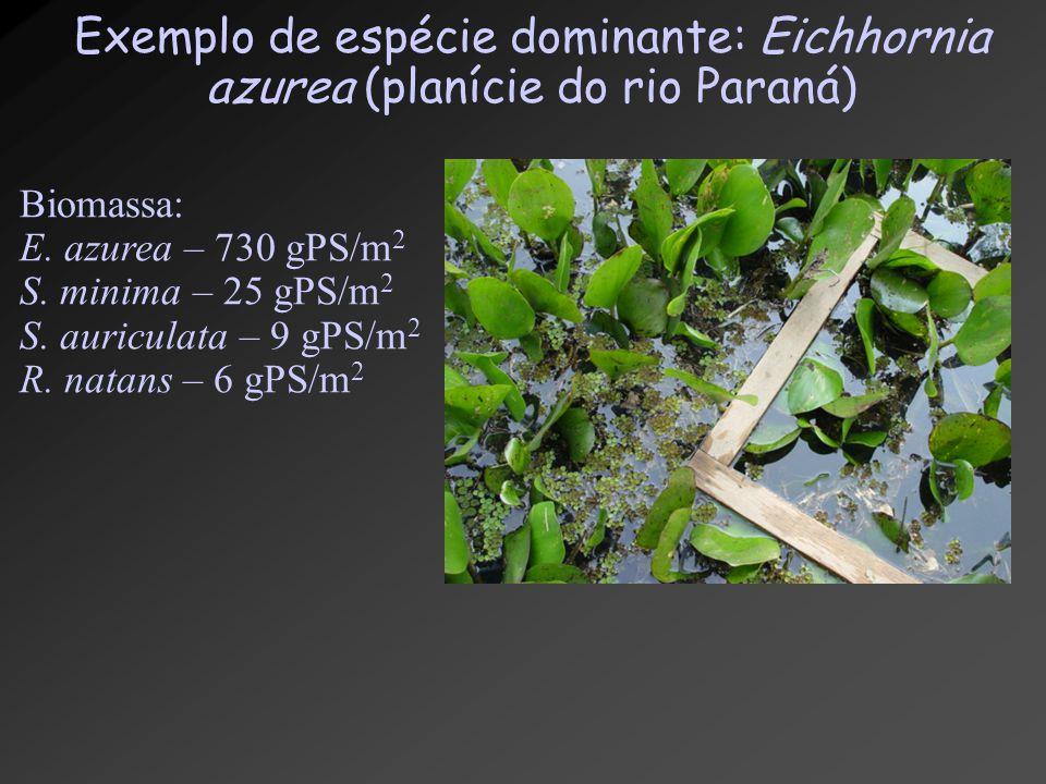 Exemplo de espécie dominante: Eichhornia azurea (planície do rio Paraná)