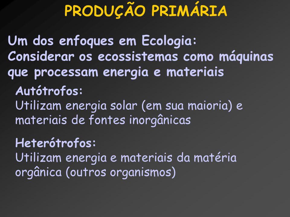 PRODUÇÃO PRIMÁRIA Um dos enfoques em Ecologia: