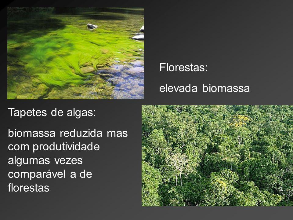 Florestas: elevada biomassa.