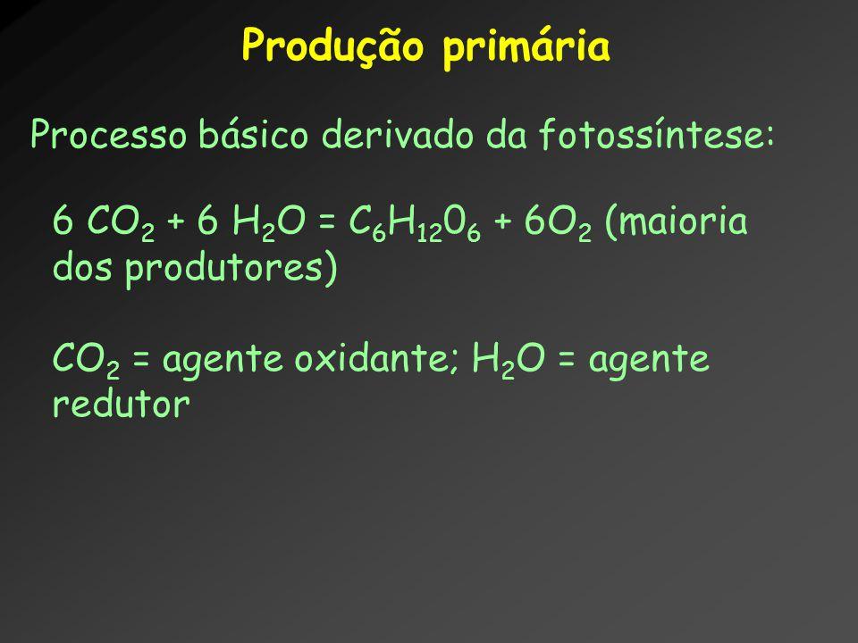 Produção primária Processo básico derivado da fotossíntese: