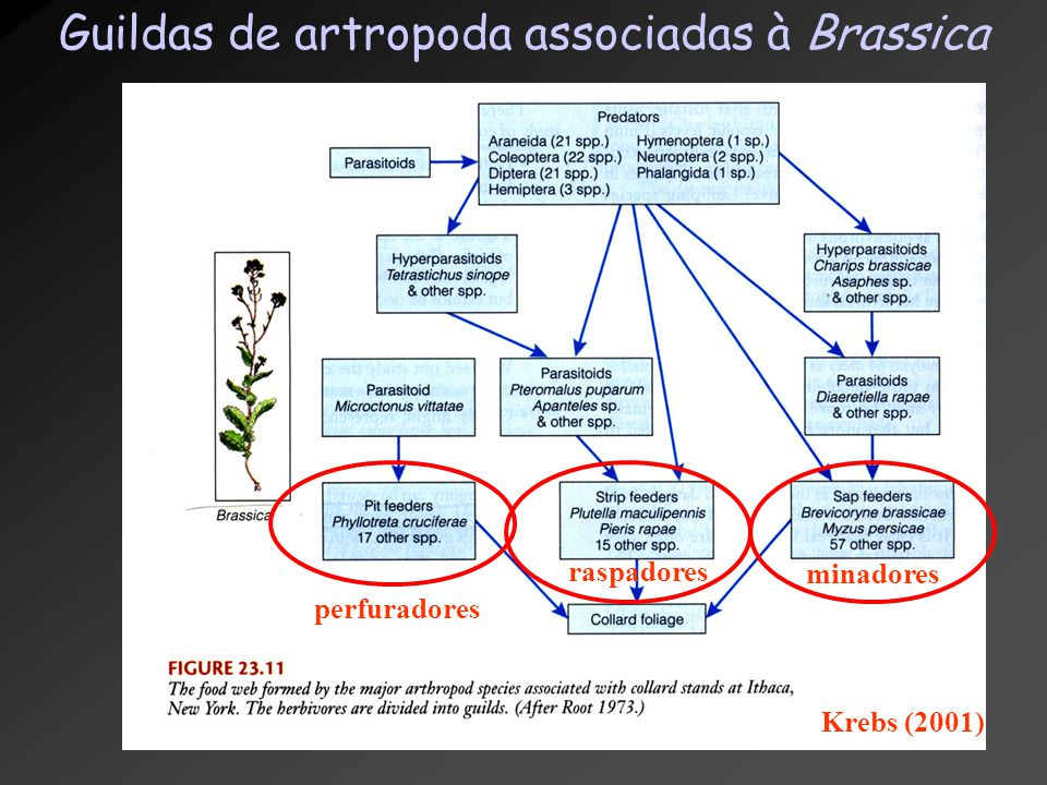 Guildas de artropoda associadas à Brassica