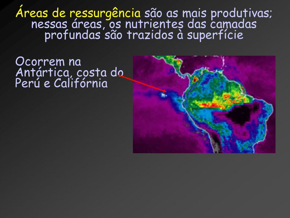 Áreas de ressurgência são as mais produtivas; nessas áreas, os nutrientes das camadas profundas são trazidos à superfície