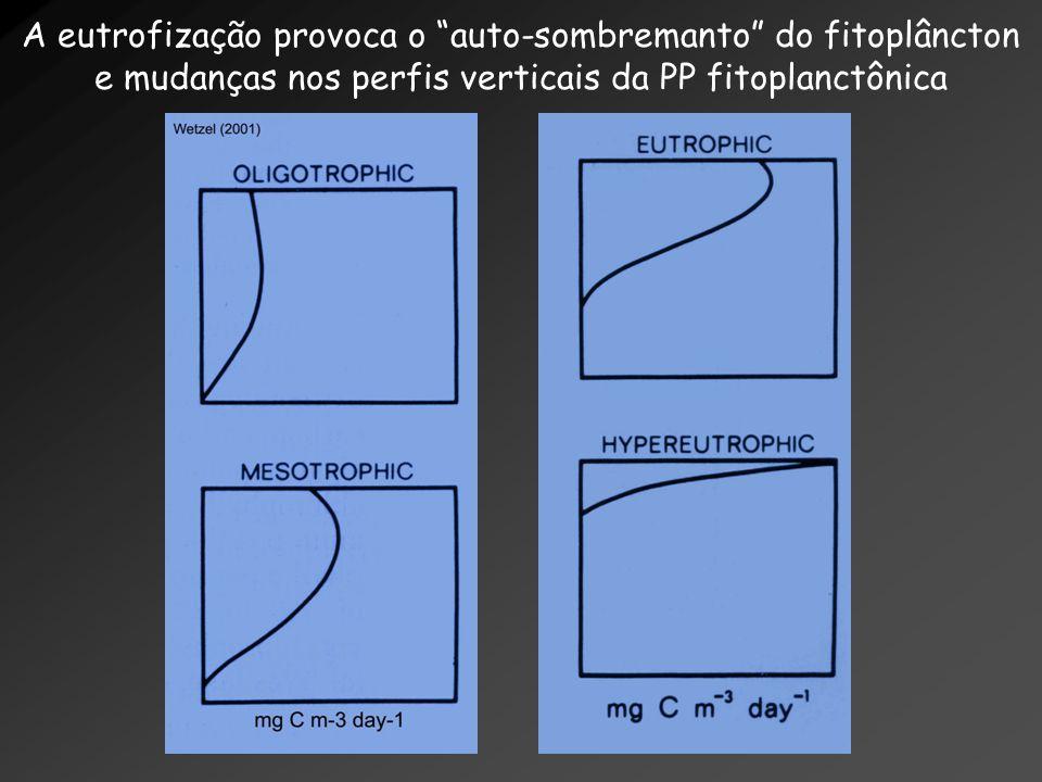 A eutrofização provoca o auto-sombremanto do fitoplâncton e mudanças nos perfis verticais da PP fitoplanctônica