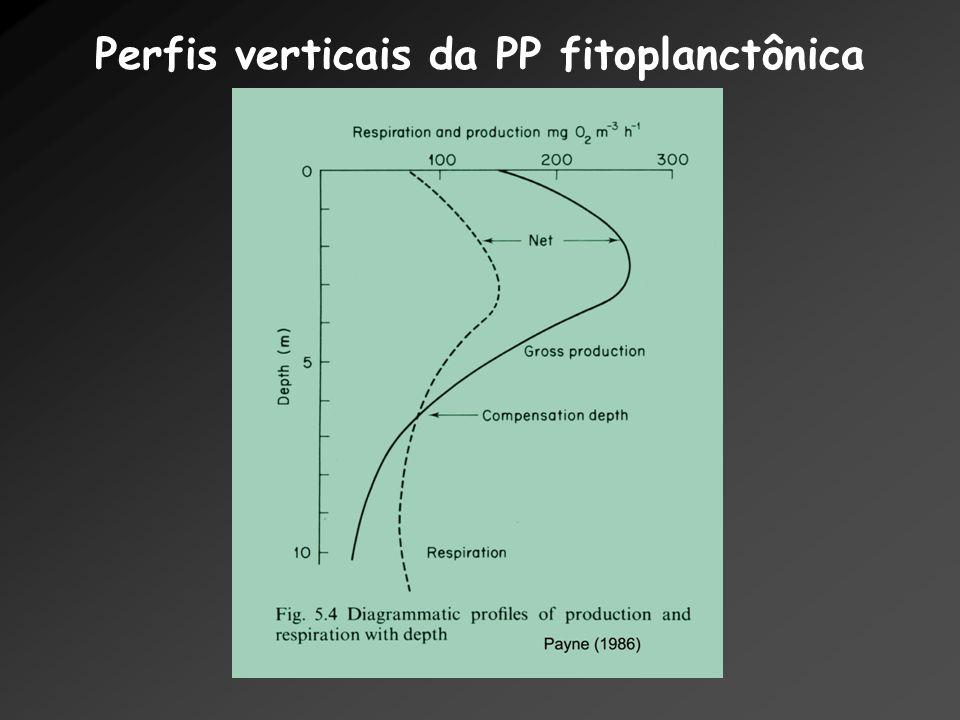 Perfis verticais da PP fitoplanctônica