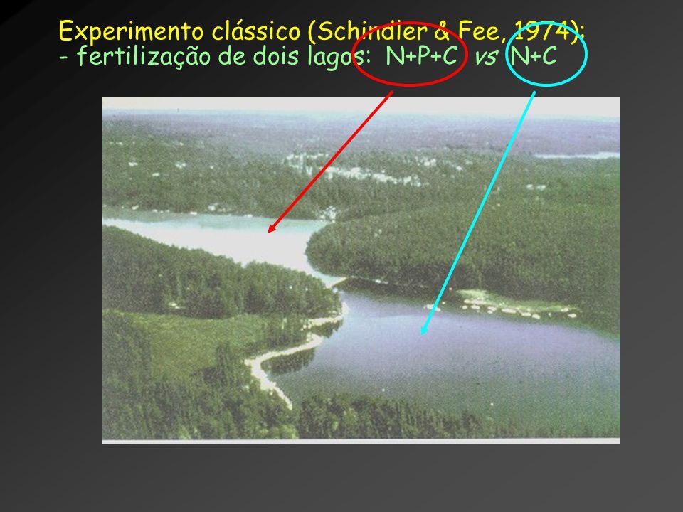 Experimento clássico (Schindler & Fee, 1974):