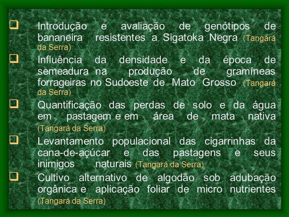 Introdução e avaliação de genótipos de. bananeira