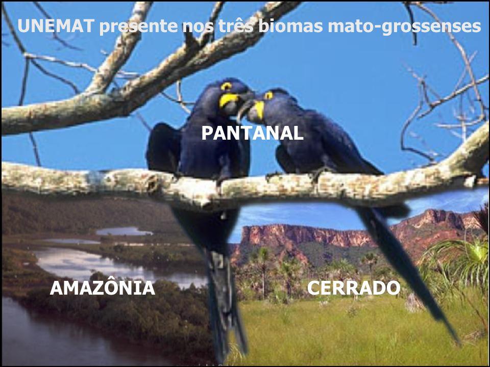 PANTANAL AMAZÔNIA CERRADO