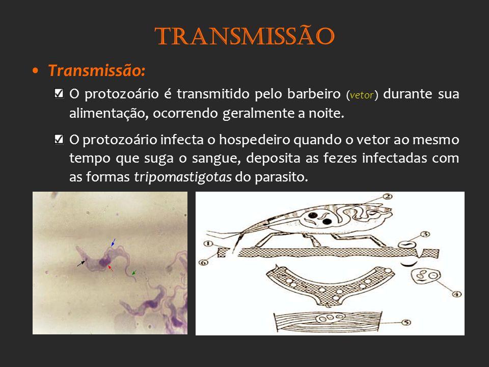 Transmissão Transmissão: