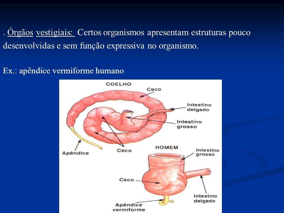 . Órgãos vestigiais: Certos organismos apresentam estruturas pouco