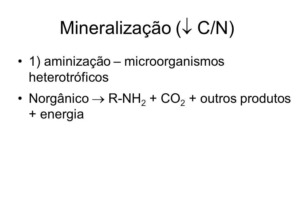 Mineralização ( C/N) 1) aminização – microorganismos heterotróficos