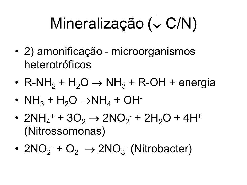 Mineralização ( C/N) 2) amonificação - microorganismos heterotróficos