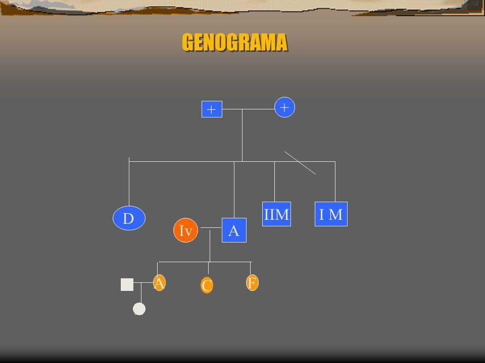 GENOGRAMA + + IIM I M D Iv A A C F L