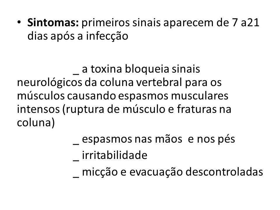 Sintomas: primeiros sinais aparecem de 7 a21 dias após a infecção
