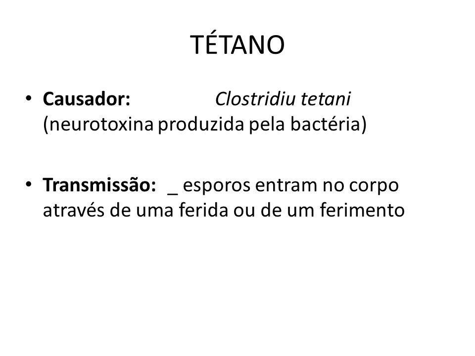 TÉTANO Causador: Clostridiu tetani (neurotoxina produzida pela bactéria)