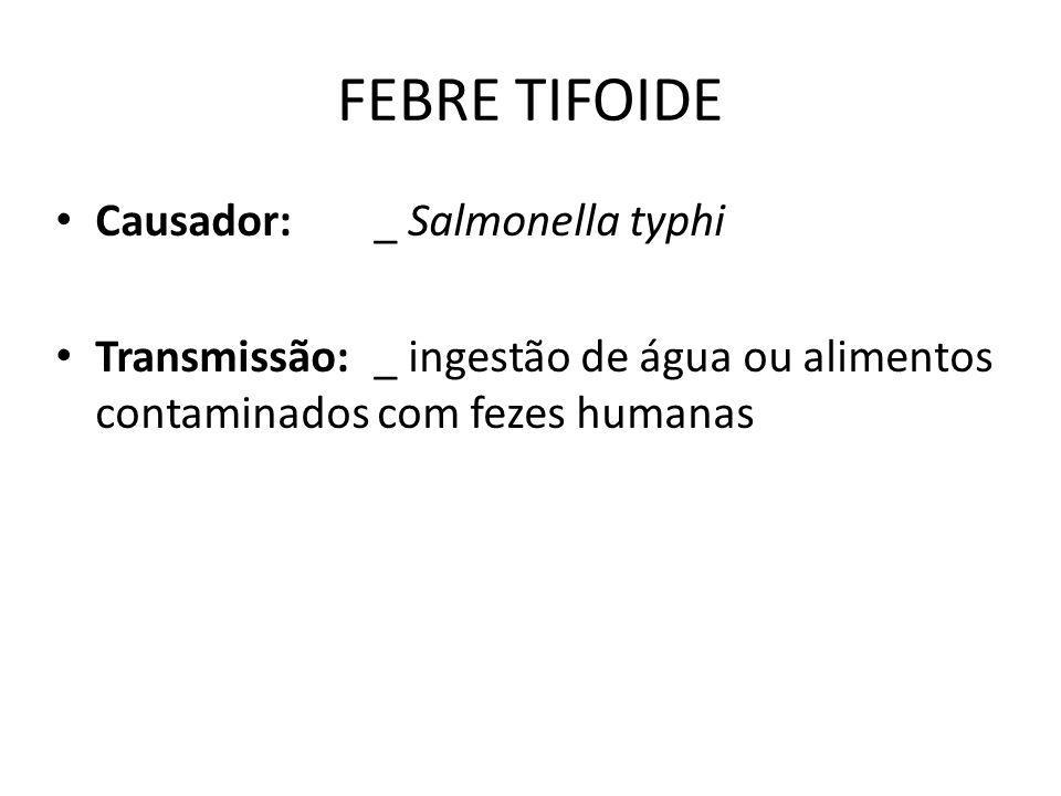 FEBRE TIFOIDE Causador: _ Salmonella typhi