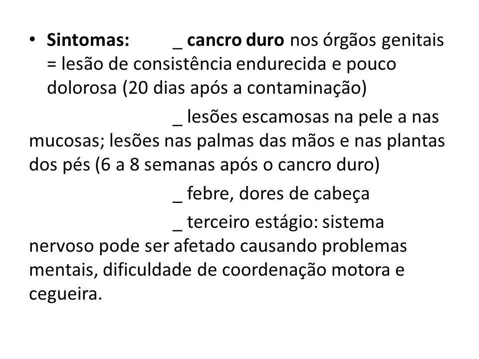 Sintomas: _ cancro duro nos órgãos genitais = lesão de consistência endurecida e pouco dolorosa (20 dias após a contaminação)