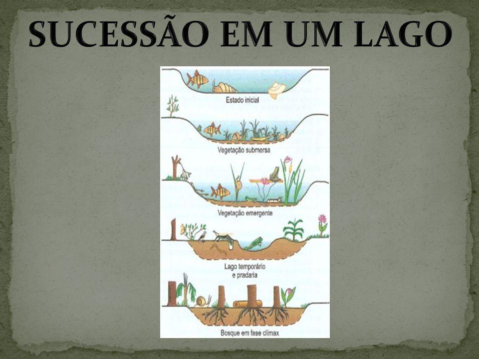 SUCESSÃO EM UM LAGO