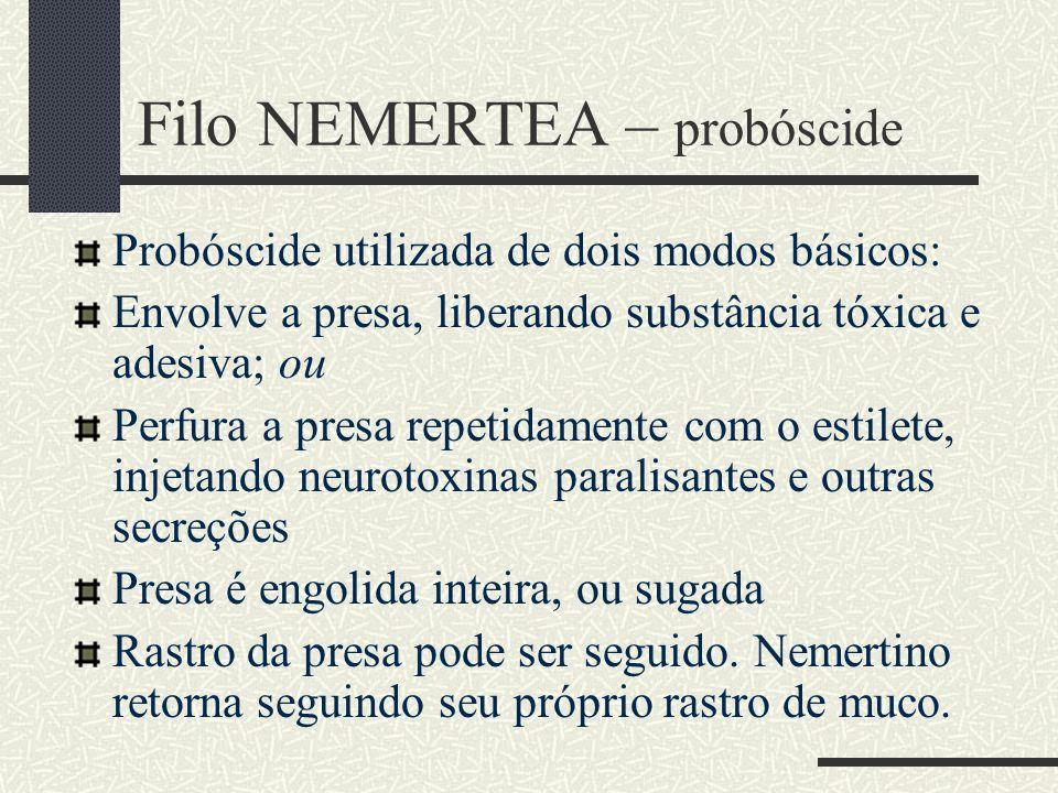 Filo NEMERTEA – probóscide