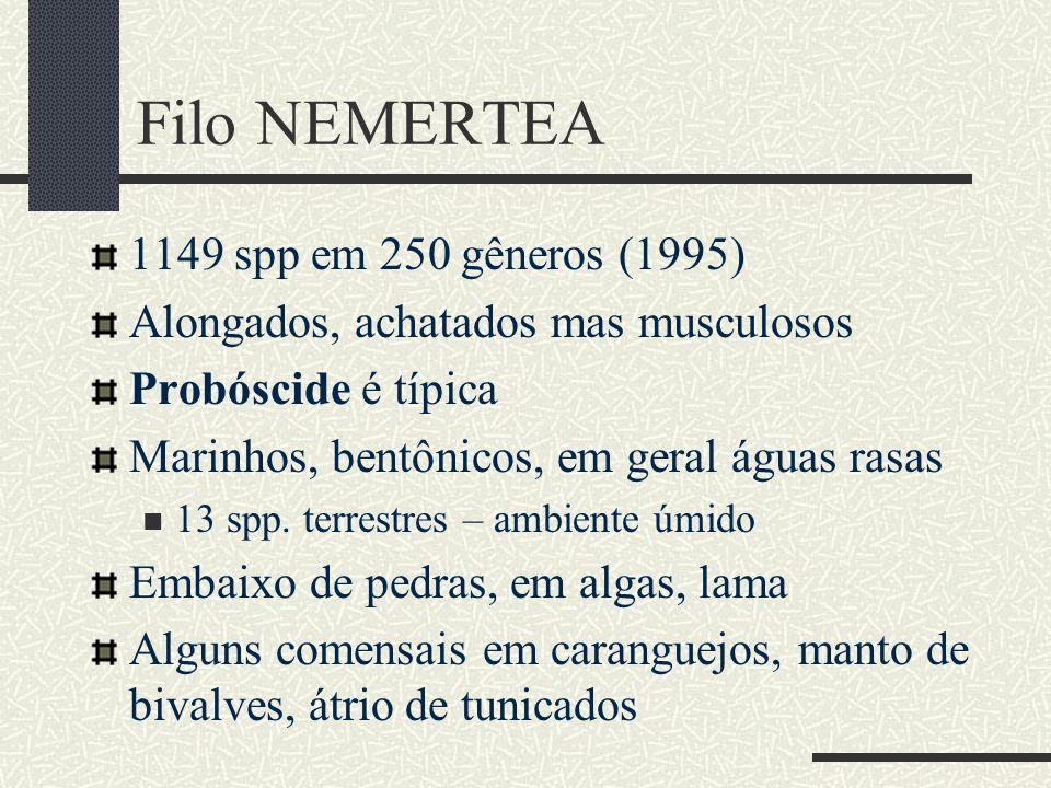 Filo NEMERTEA 1149 spp em 250 gêneros (1995)